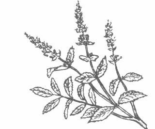 Antonio garrisi dizionario leccese m for Salvia da colorare
