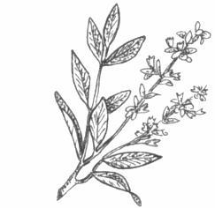 Cronistoria avvenimento ecclesiale for Salvia da colorare